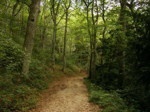 Bois et forêts - Chantilly - Présentation -