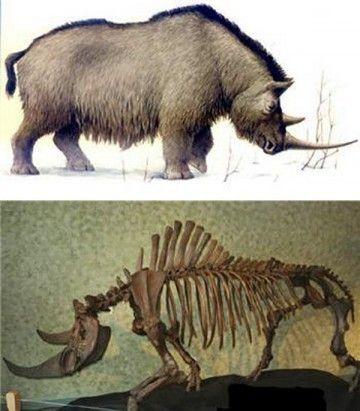 Animaux préhistoriques - Extinction de la faune d'Amérique