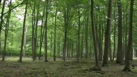 Bois et forêts - Chantilly - Flore -