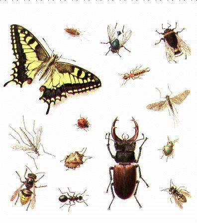 Animaux -Insectes - Les monstres de l'herbe -