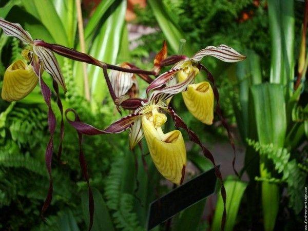 Orchidées - En images -