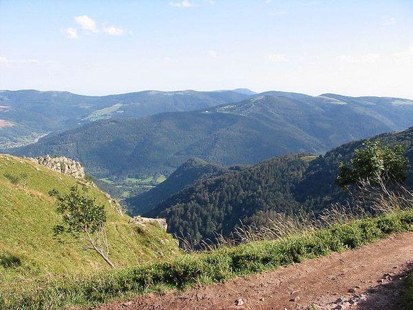 Environnement - Flore du massif des Vosges -