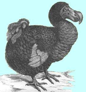 Animaux - Oiseaux - Le Dodo - (espèce éteinte)