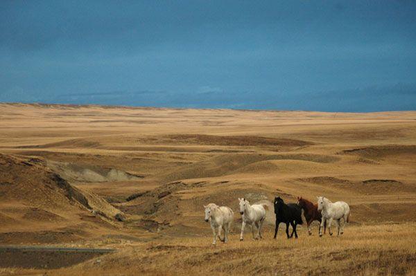 20080429223903_chevaux-pampa-argentine.jpg