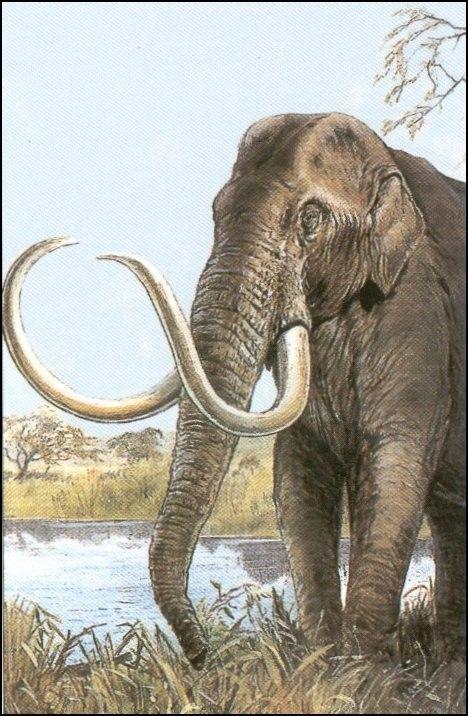Animaux préhistoriques - La faune d'Amérique du Nord...