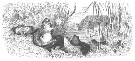 Fables de La Fontaine -Livre I -La Grenouille qui veut...