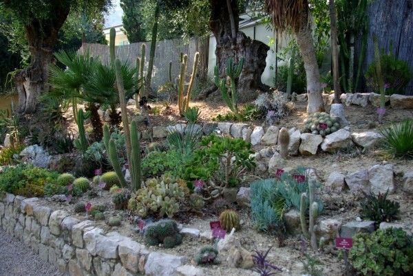 Cactées et plantes succulentes - Généralités