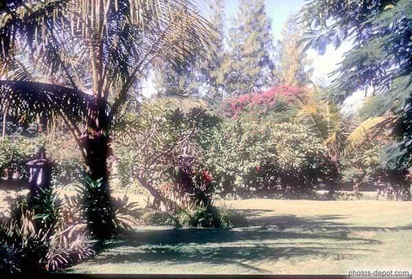 Arbres et arbustes - à quoi servent les fleurs -