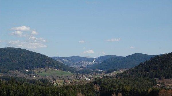 Environnement-Flore du massif des Vosges-Etage montagnard