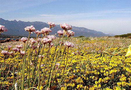 Environnement - Les fleurs protégées en France -