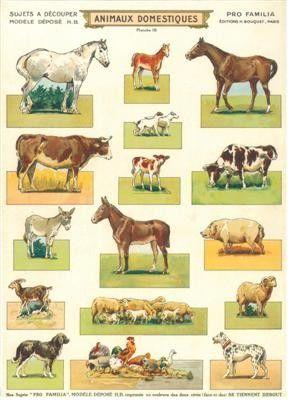 Les animaux domestiques - La domestication -
