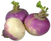 Les légumes - le Navet -