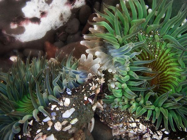 aquariophilie eau de mer - Les invertébrés -
