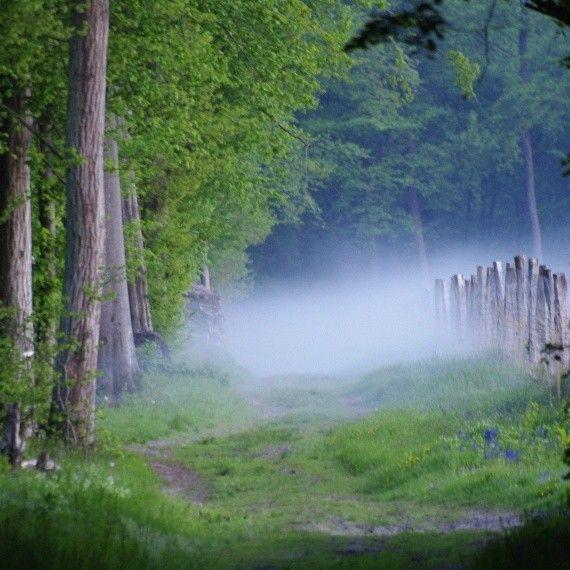 Bois et forêts - Chantilly -Milieux et habitats  -