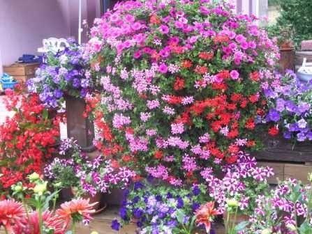 Au jardin - Au nom de la fleur !