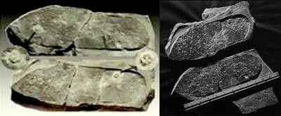 Paléontologie - Des empreintes mystérieuses -
