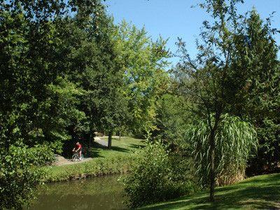 Arbres et arbustes - à quoi servent les feuilles -