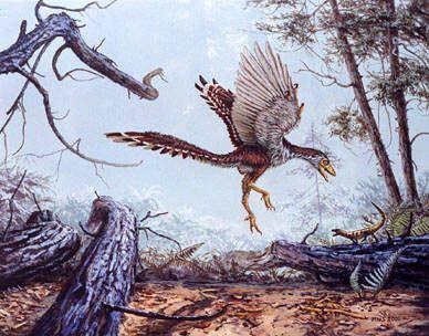 Animaux préhistoriques - Archæopteryx -