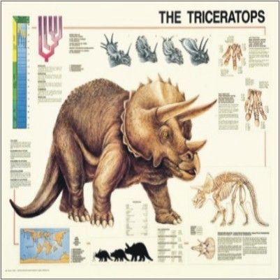 Les dinosaures -Triceratops -