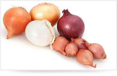 Les légumes - l'Oignon -