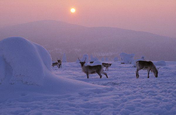 Exceptionnel Voyage - Au Pays du Père Noel - - Centerblog LU19