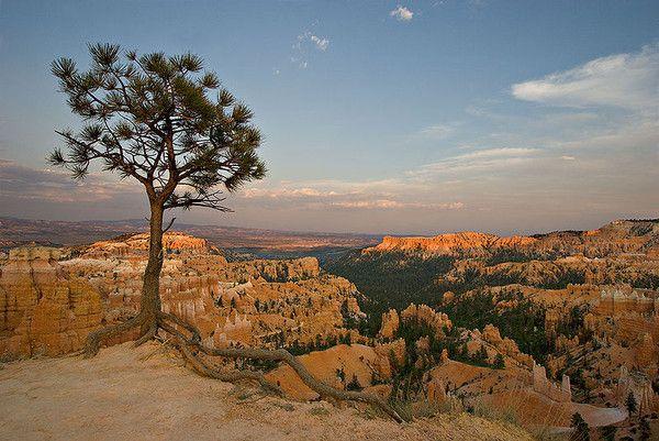 Parcs, réserves... - Bryce Canyon - Faune - Oiseaux -