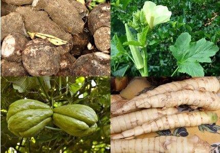 Les légumes - Légumes du bout du monde -