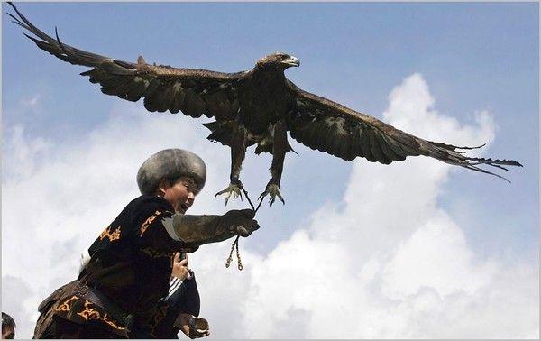 Peuples du monde-les Mongols-Chasse avec un aigle royal
