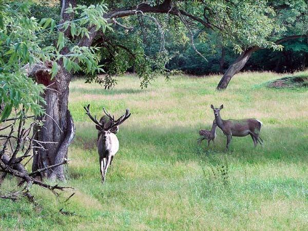 mammifères - mammifères de nos forêts -