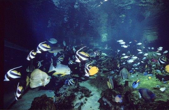 Monde marin - Un océan tout en couleur -