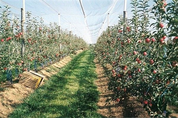 Arbres fruitiers - généralités -
