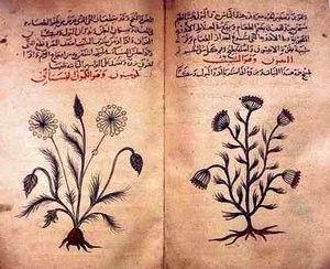 Phytothérapie - Préparations des plantes -