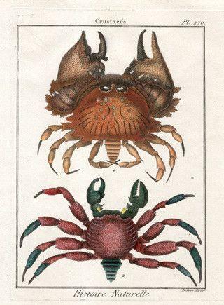 Animaux - Crustacés-Caractères généraux