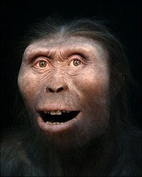 Préhistoire - Lucy, l'Australopithèque