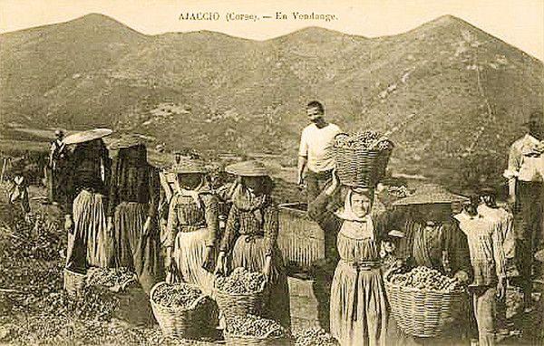 La vigne et le vin - Les vendanges -