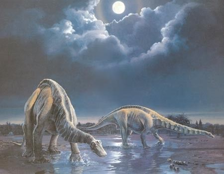 Les dinosaures - Apatosaurus -