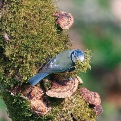 Animaux-Oiseaux -Compagnons de nos villes et de nos jardins