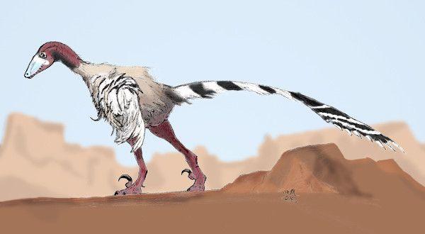 Les dinosaures - L'Achillobator