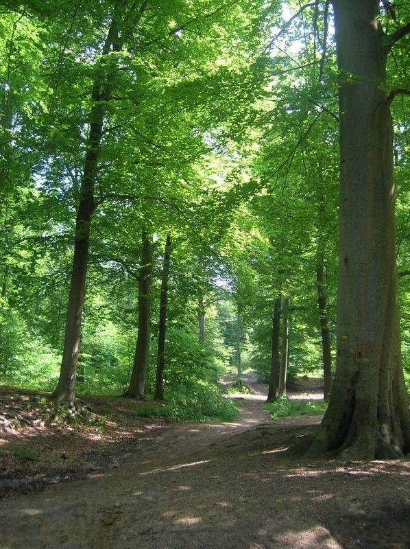 Bois et forêts - Chantilly - Faune -