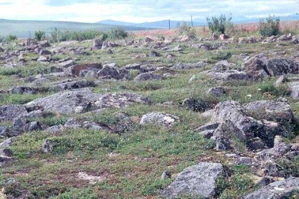 Ecosystèmes - la Toundra -
