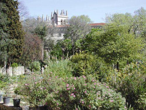 Montpellier_jardin_plantes1.jpg