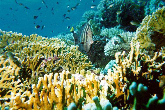Ecosystèmes - Récif corallien -