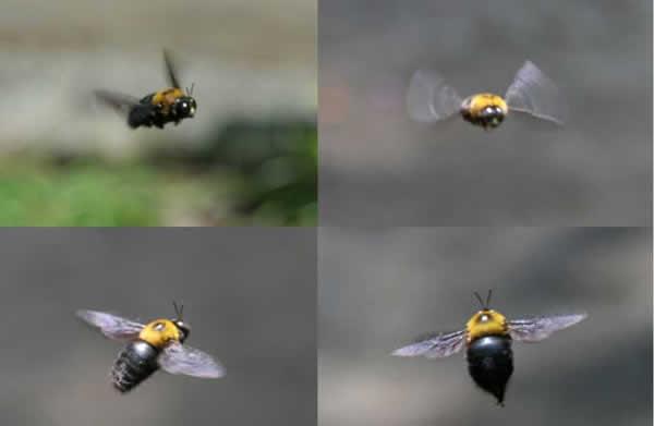 abeille_017.jpg