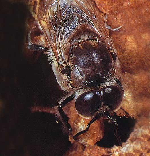 abeille_024.jpg