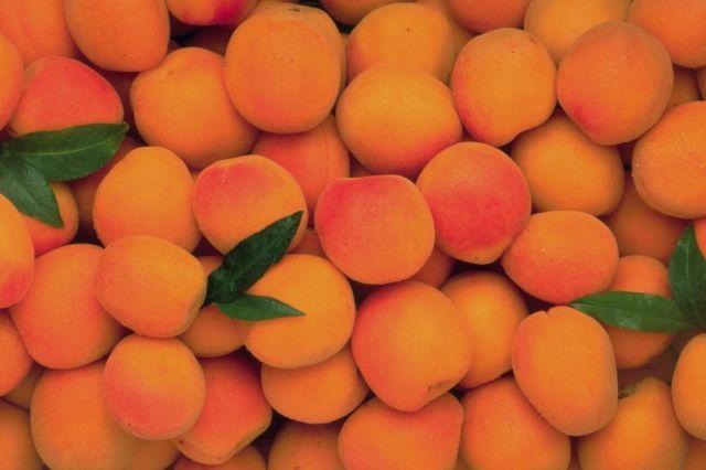 abricots1.jpg
