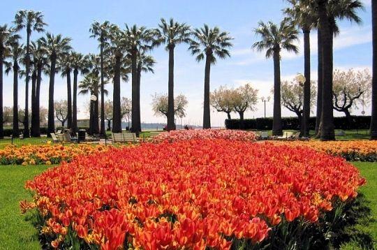Parcs et jardins massifs et parterres floraux for Le jardin cannes