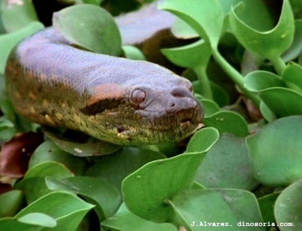 anaconda-d-12-15e992a.jpg