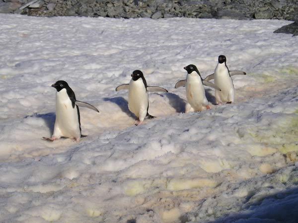 antarctique-22.jpg