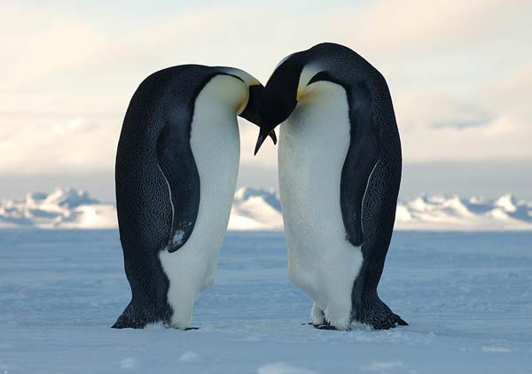 antarctique-34.jpg