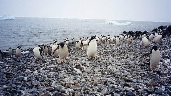 antarctique-35.jpg